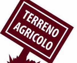 CALENZANO - Baroncoli terreno agricolo uliveto/bosco.
